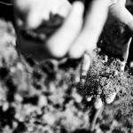 Travail du sol et respect de l'environnement